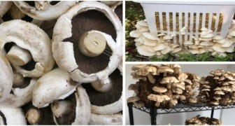 Come coltivare i funghi in casa in modo semplice per avere prodotti buoni e freschi quando si vuole