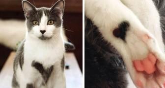 Questo gatto ha la pelliccia ricoperta da chiazze a forma di cuore ed è diventato una vera celebrità