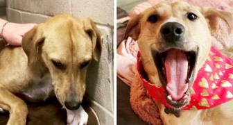 Before and after adoption: 15 pets who found a new home and love their humans