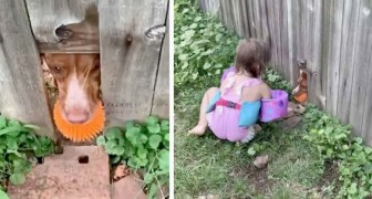 Le chien fait un trou dans la clôture pour pouvoir jouer avec sa balle préférée avec les petites filles des voisins