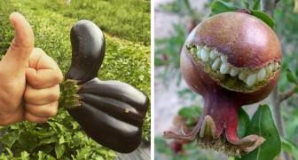 Als de natuur tot leven komt: 20 voorbeelden van groenten en fruit met bizarre en bijna menselijke vormen