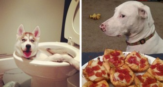 16 incorrigible dogs with whom it is practically impossible to get angry