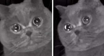 She leaves the cat home alone but then sees him crying on the surveillance camera