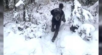 Springande man eller en hund? Denna optiska illusion kan berätta mycket om vårt sinnestillstånd