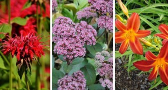 8 plantes résistantes dont vous devez peu vous occuper, parfaites pour avoir un jardin parfait sans trop de travail
