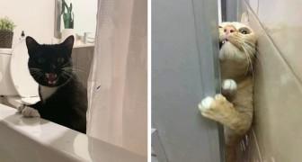 19 foto's van katten die absoluut niets geven om de persoonlijke ruimte van hun baasjes