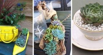 Piante succulente: rendi magica la tua casa con queste composizioni uniche e originali