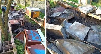 Danno fuoco a 80 arnie e uccidono 700.000 api: il terribile rogo nel casertano