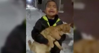Mom, I want it!: A child's desperate cry to his mother because he would like to adopt a kitten he found in the street