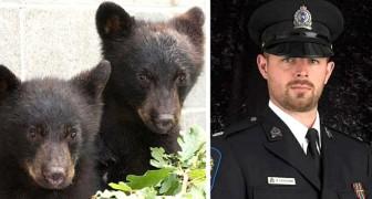 Ils suspendent un officier parce qu'il refuse de tuer deux bébés ours : il est allé à l'encontre des ordres qu'il a reçus