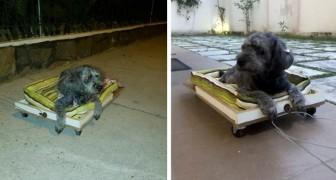 Hij bouwt een kar met wielen om zijn oude hond mee te nemen: ze kan haar achterpoten niet bewegen