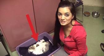 Um filhote de cão em uma ninhada de gatos. A reação da mamãe? Sensacional.