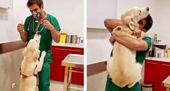 Veterinario ha una tecnica infallibile per fare la puntura ai suoi pazienti a 4 zampe senza che neanche se ne accorgano
