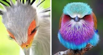 15 foto's van vogels die zo fascinerend en bijzonder zijn dat ze van een andere planeet lijken te komen