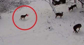 Una telecamara es posicionada en el bosque: lo que registra los hara sonreir