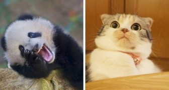 Crazy animals: 16 expressive and hilarious species that should win a sympathy award