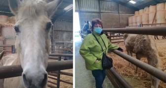 71-jährige Frau bittet um Hilfe, um ihre beiden älteren Pferde vor dem Schlachten zu retten