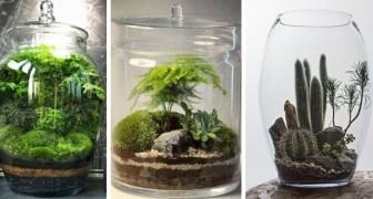 Giardini in miniatura: lasciati ispirare da questi splendidi terrari da realizzare nei vasi di vetro