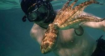 Er taucht ein Jahr lang in den Ozean, um eine ungewöhnliche Freundschaft zu einem Oktopus zu schließen: Eine fast unglaubliche Geschichte