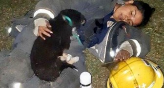 Exhausted firefighter collapses to the ground with the little dog she just saved from the flames