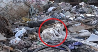 Here's the incredible rescue of this dog who was dying in a dump !
