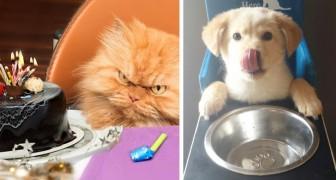 Cani vs. gatti: 18 foto a confronto dimostrano come questi animali provengano da due mondi differenti