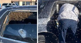 Een brandweerman buiten dienst redt een automobilist die 15.000 bijen in de auto heeft gevonden