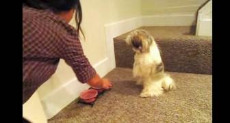 Dà del cibo al suo cane ma gli impedisce di mangiarlo subito: il motivo è stupendo