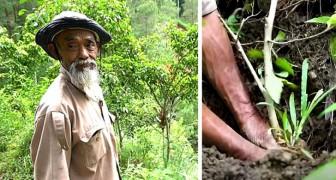 Pianta 11.000 alberi e fa rinascere un'intera foresta da solo: gli davano del pazzo ma ora è un eroe