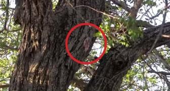 Ze vinden deze kleine hangend in een boom, hier is hoe ze zijn leven redden