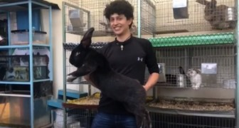 Uno studente alleva i conigli più grandi del mondo: vuole creare una nuova specie migliorata