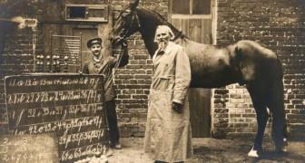 """Die sonderbare Geschichte von Hans, dem intelligenten Pferd, das zählen und auf die Fragen seines Besitzers """"antworten"""" konnte"""