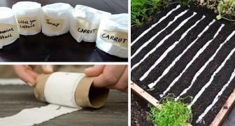 Nastro per semina fai-da-te: pianta con ordine ortaggi e fiori con questo metodo naturale e a costo zero