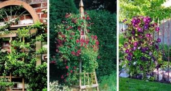 Treillis DIY pour plantes grimpantes : décorez votre jardin avec ces splendides idées vertes