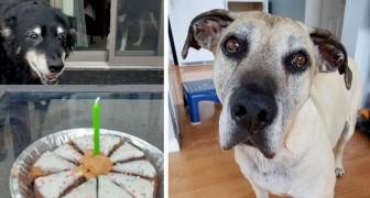 Diversamente giovani: 16 cani che hanno raggiunto la terza età ma che non hanno mai perso il loro smalto