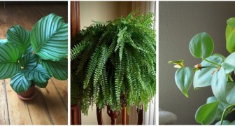 5 piante da appartamento perfette per gli angoli poco illuminati di casa