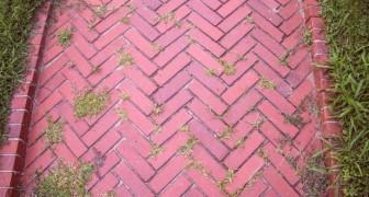 Mai più erbacce tra le mattonelle in giardino con questi semplici trucchi fai-da-te