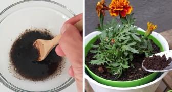 Non gettare via i fondi del caffè: impara questi modi alternativi per usarli in casa e in giardino