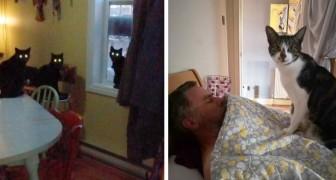Onverbeterlijke katten: 17 katachtigen die zich lieten kennen dankzij hun unieke en rare gedrag