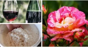 Piante sempre rigogliose? Prova a usare questi comuni ingredienti da cucina come fertilizzanti