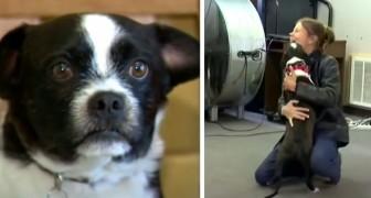 Elle perd son chien et le retrouve après 2 longues années : J'avais peur qu'il ne me reconnaisse pas