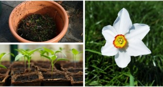 Primavera in giardino: tutte le attività da sbrigare per prenderci cura degli spazi verdi
