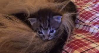 Leva para casa quatro órfãos gatinhos, mas não sabe que alguém vai adotá-las