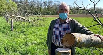 Abbattono 12 alberi di noce di un arboricoltore durante la notte: è un disastro, erano il mio orgoglio
