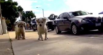 O resgate de dois cachorrinhos, vai te mostrar o exemplo de lealdade