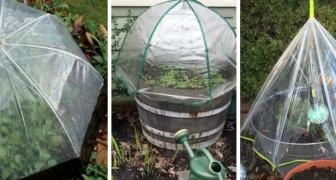 Mini-serra da giardino: scopri come realizzarla con gli ombrelli trasparenti e proteggi le tue piante