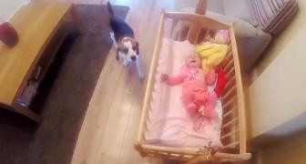 Schaut, was dieser Hund macht, wenn das Neugeborene zu weinen beginnt...