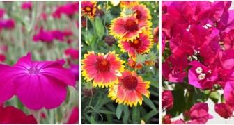 Vous n'avez pas le temps d'arroser les fleurs ? Découvrez 10 plantes fantastiques qui n'ont pas besoin de beaucoup d'eau