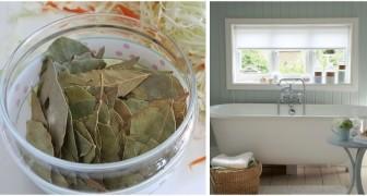 Alloro: scopri come usarlo per profumare il bagno in modo naturale e piacevole