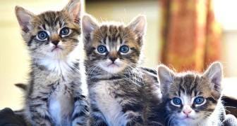 Ich musste gerade 4 Kätzchen einschläfern, sterilisieren Sie Ihre Tiere: der harsche Ausbruch eines Tierarztes